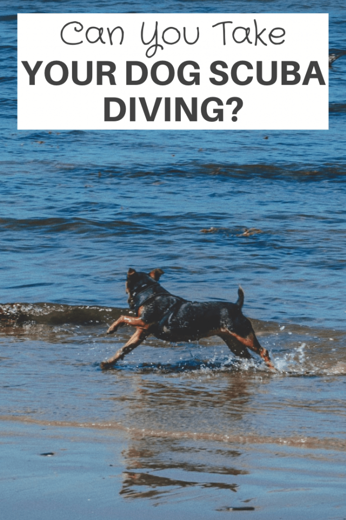 Can you take your dog scuba diving
