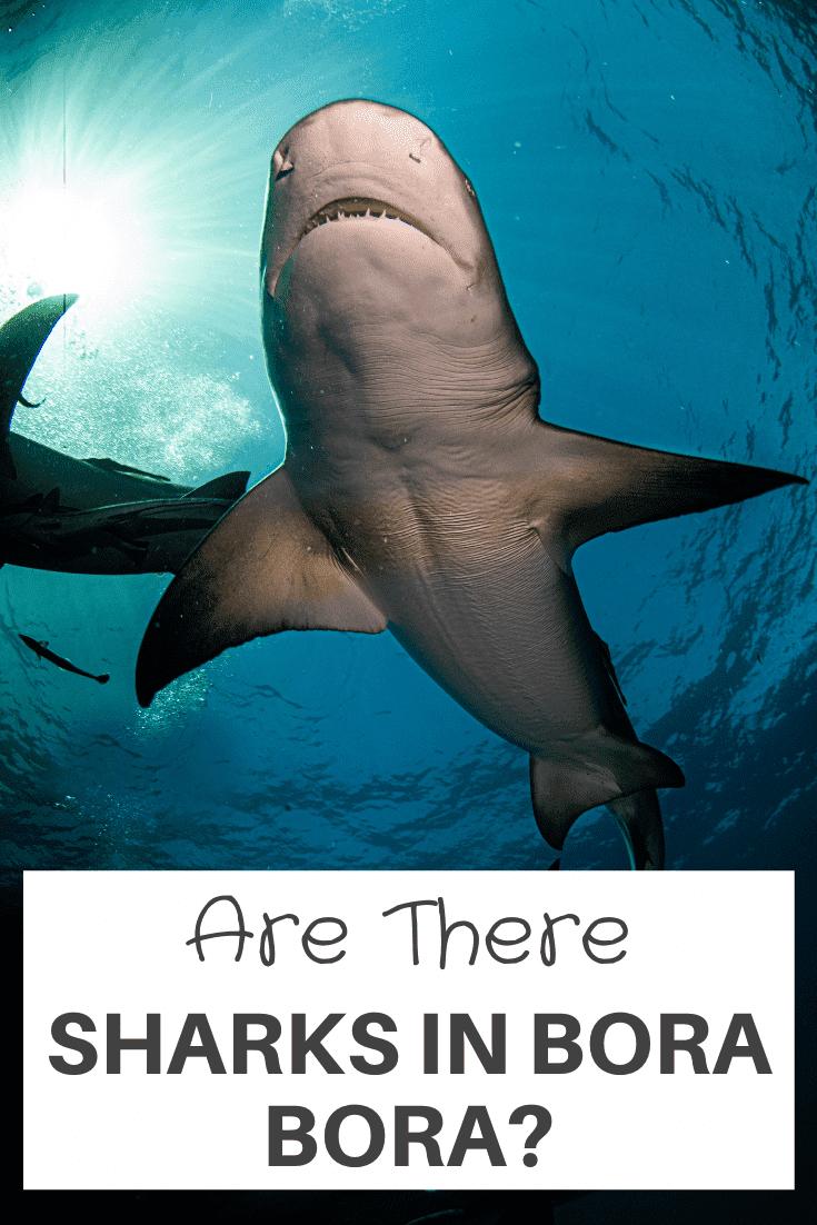 are there Sharks In Bora Bora